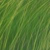 Gras01full